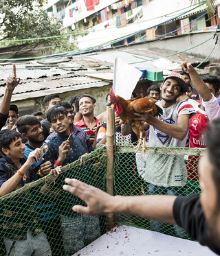 "After a cockfight the owner holds up his animal which just won the tournament. The winner will later receive a prize from the ""mayor"" of the colony, which was donated by the residents."